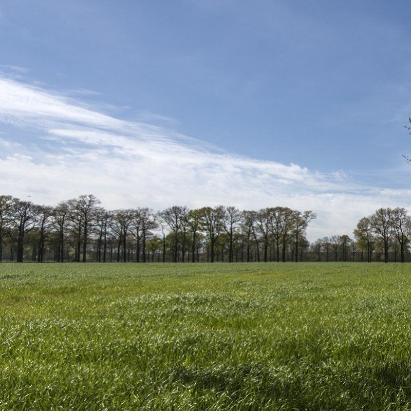 Merksplas;België;landschap;2016;James van Leuven