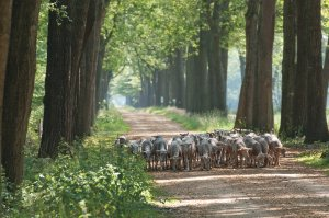 Schapenbegrazing Wortel-Kolonie BE, James van Leuven